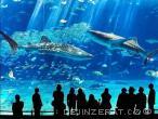 Akrylátová akvária